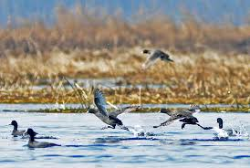 PEC reminds government of new MoEF rules on preservation of wetlands
